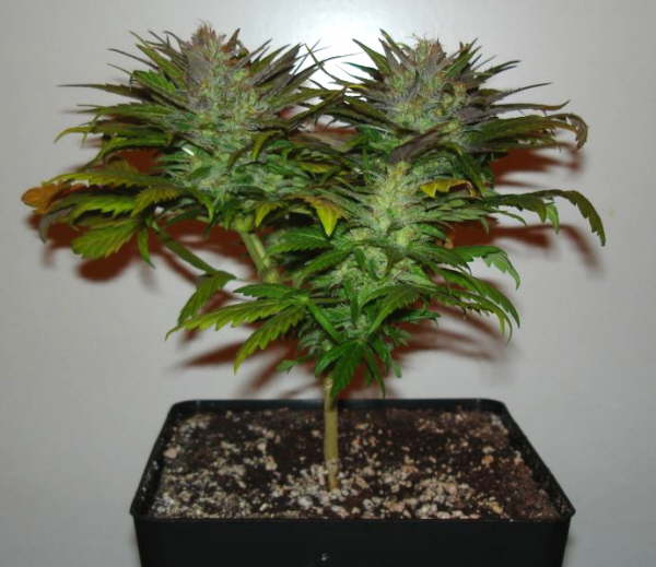 Omega Garden anyone tried them Hydroponic Systems UK420