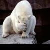 polar_ice