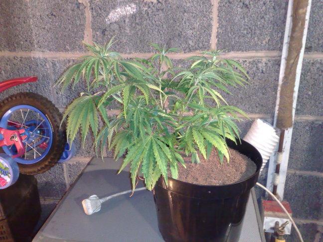 sick plants