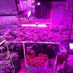 GrowZone1 uk