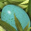 EggNigma