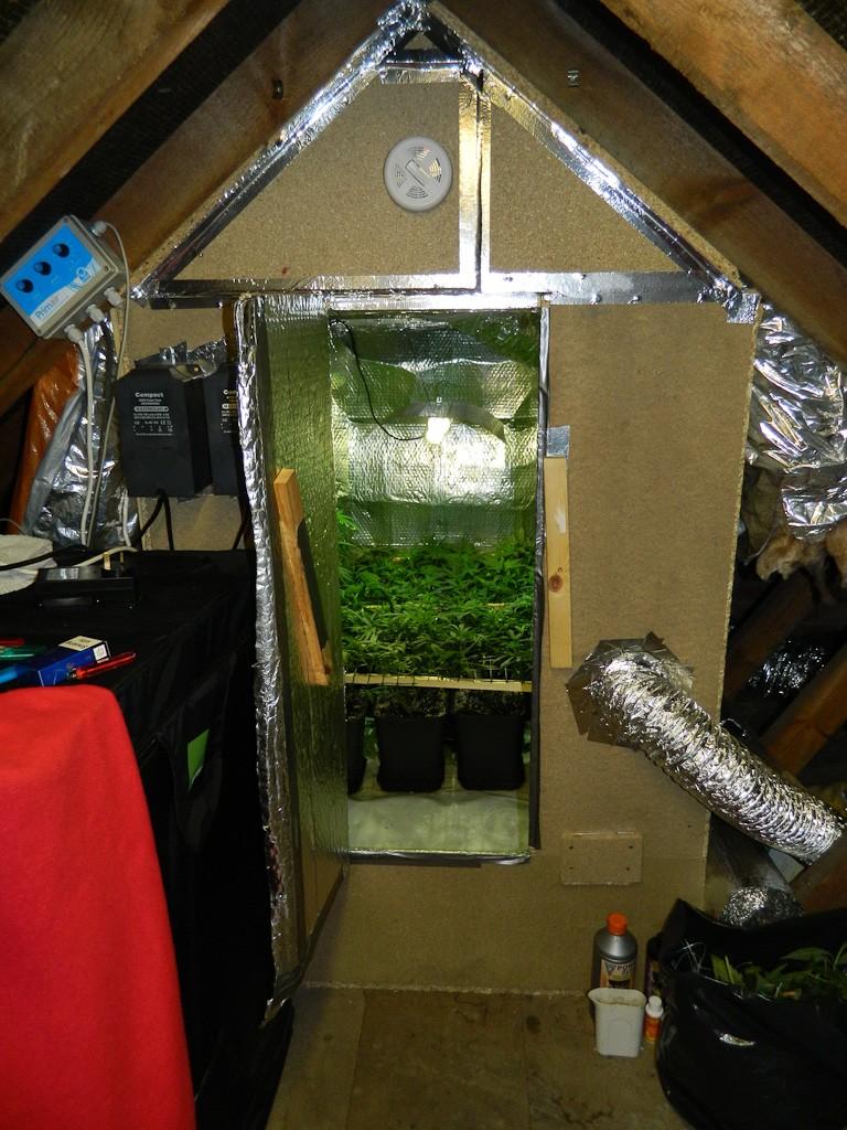 Loft Growing Tent Vs Diy Build Design And Location Uk420