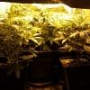 bushy drobe 23 days