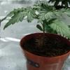 Plan B   Ugorg Blues   Day 12 Seedling Day 12