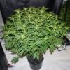30515   plant 1