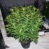 30515   plant 3
