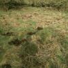 dead grass camo