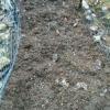 amended soil
