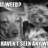 what-weed?