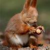 forece squirrel meme