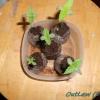 OutLaw Seedlings