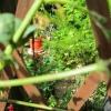 Garden Plants.