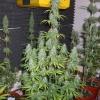 PowerPlant 12 12  Day 70  10wks 035