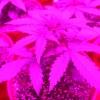 PowerPlant 12 12  Day 21 005