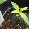 seedling 6