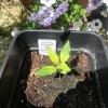 seedling 7