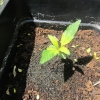 seedling4