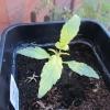seedling 10
