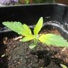 seedling 5