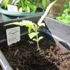 seedling 9