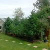 2. canna garden side On