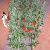 DF Harvest 104  74 169