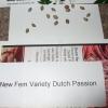 Dutch Passion Strain D New StrainTest Grow 004