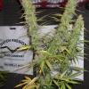 DF Harvest 104  74 042