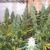 DF Harvest 104  74 012