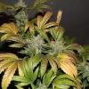 LB WHOLE PLANTS (2)