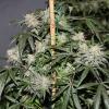 LB WHOLE PLANTS (1)