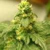 plant1.5