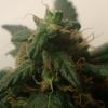 plant2.3