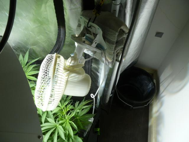 gallery_42006_9955_60321.jpg & How do you hang your osciallting fans in your grow tent ...