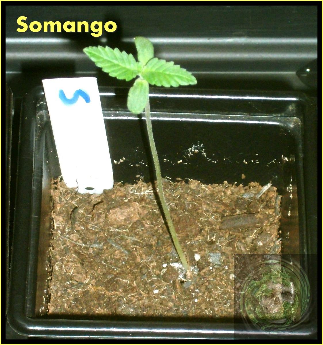 large.58b6ee6e3cafd_SeedsmanCompoGrow-Week1004.jpg
