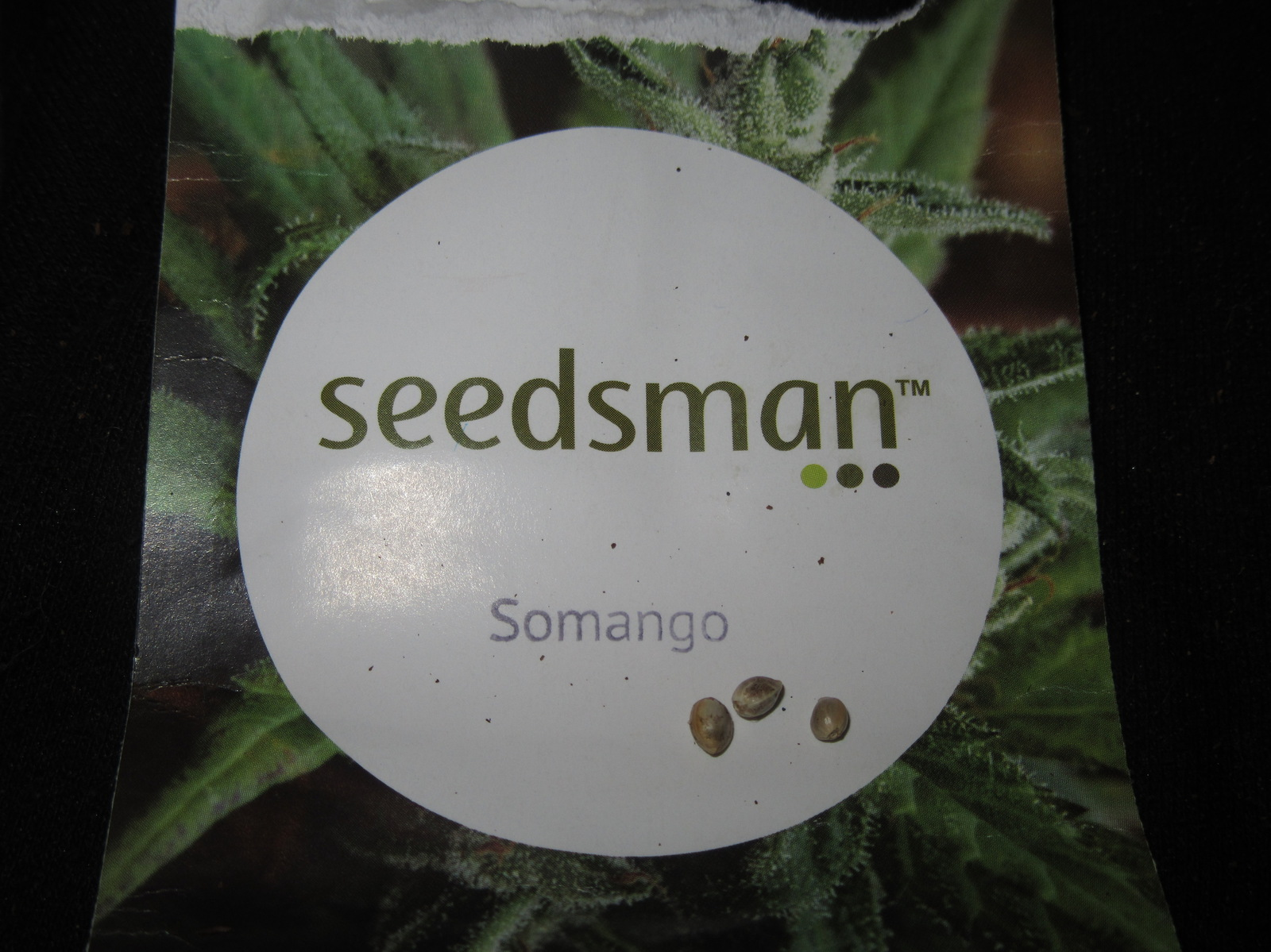 large.Somango.jpg