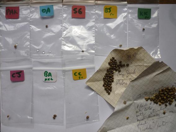 large.seeds.jpg