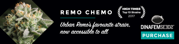 large.banner-remo-600x150.jpg.afad3a0499