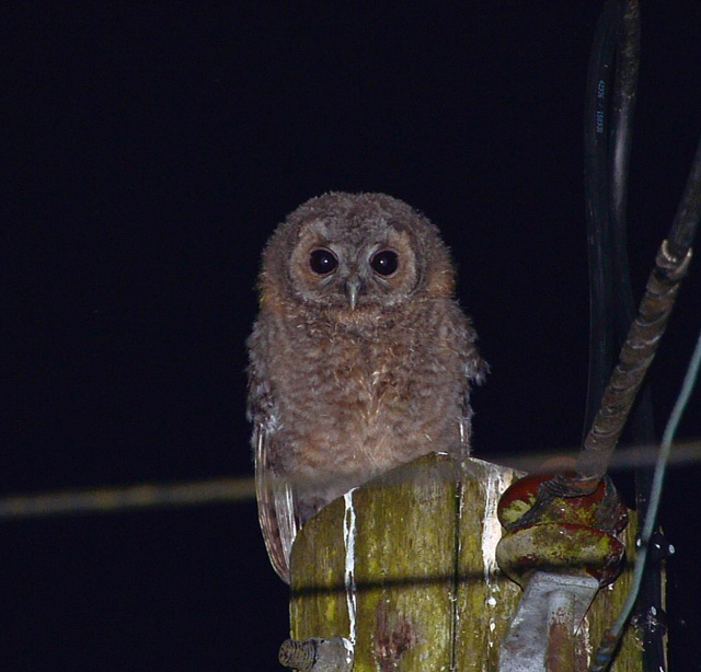 large_owl.jpg