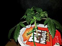 JamJars LED grow