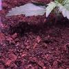 Day 9 - #3 - White powder on soil???!