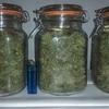 ugorg blues jarred. plant1.