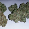 ugorg blues plant2 pic1.