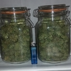 ugorg blues jarred .plant2.