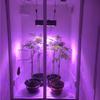 Growdrobe02.JPG