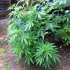 OutdoorGrapefruit-midJune.jpg