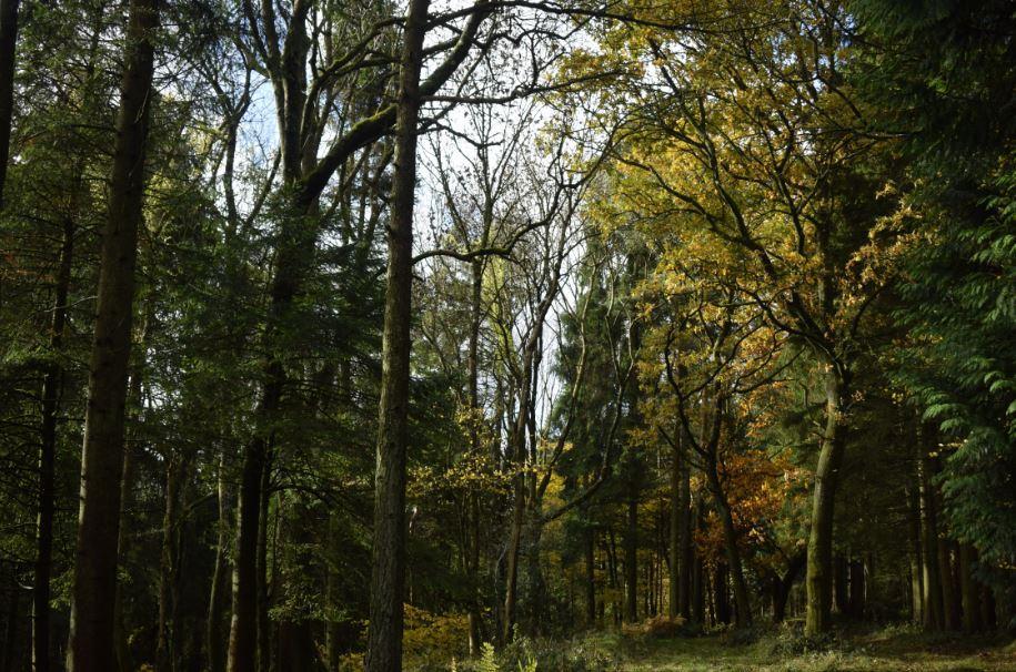 large.Autumn3.JPG
