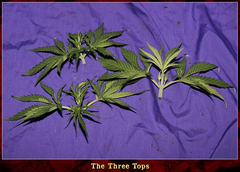 large.The-Three-Tops.jpg