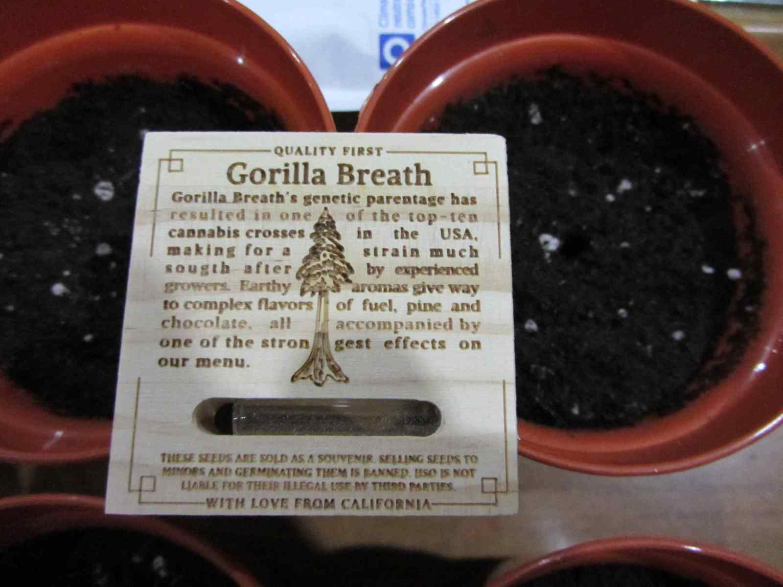 Three Blue Kings with Gorilla Breath - Humboldt Seed