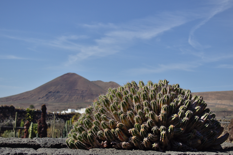 large.Cactus.jpg